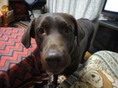 加覧 愛 (がらんあい) 公式ブログ/大阪犬。 画像1