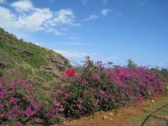 加覧 愛 (がらんあい) 公式ブログ/カウアイ島旅行記。その3 画像3