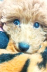 ℃-ute 公式ブログ/わんっ千聖 画像2