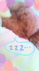 ℃-ute 公式ブログ/黄色、黄色、黄色…Σ( 〇ロ〇;) 画像3