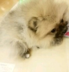℃-ute 公式ブログ/命名♪(  ´θ`)ノ 画像1