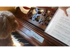 ℃-ute 公式ブログ/矢島家のピアニスト 画像1