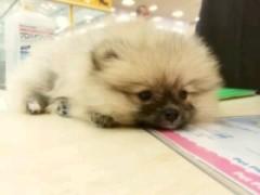 ℃-ute 公式ブログ/新しい家族舞美ヽ( ;▽;)ノ 画像2