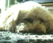 ℃-ute 公式ブログ/今日の愛犬たち 画像1
