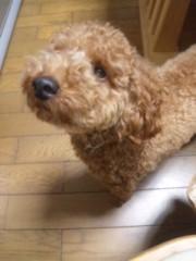 ℃-ute 公式ブログ/へーんしん!! 画像1