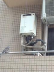 ℃-ute 公式ブログ/鳩の夫婦(^-^) (^-^) 画像2
