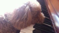 ℃-ute 公式ブログ/矢島家のピアニスト 画像3