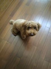 ℃-ute 公式ブログ/愛犬コロン 画像1