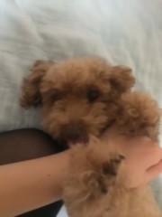 ℃-ute 公式ブログ/昨日…(((o(* ゜▽゜*)o))) 画像3