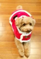 ℃-ute 公式ブログ/winter(*^^*)  画像1