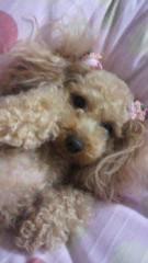 ℃-ute 公式ブログ/さて、今日は愛犬特集第3弾 画像1