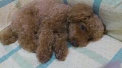 ℃-ute 公式ブログ/夢 画像2