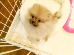 ℃-ute 公式ブログ/あなたは…どっち??(  ̄▽ ̄) 画像2