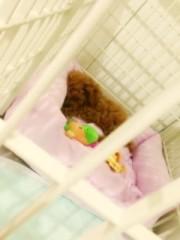 ℃-ute 公式ブログ/やばい!mai 画像1