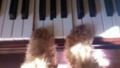 ℃-ute 公式ブログ/矢島家のピアニスト 画像2