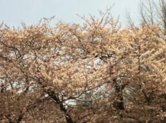 小川昌宏 公式ブログ/お花見 画像1