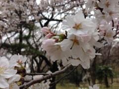 小川昌宏 公式ブログ/いろいろ 画像1