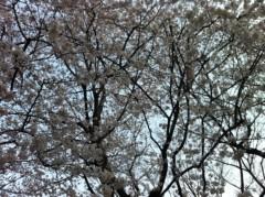 小川昌宏 公式ブログ/お花見 画像2