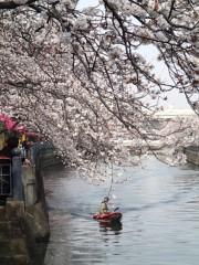 鈴木八朗 公式ブログ/桜を観んとや生まれけむ 画像3