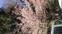 秋山あすな 公式ブログ/春の予感 画像1