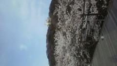 秋山あすな 公式ブログ/お花見 画像3