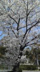 秋山あすな 公式ブログ/通学路 画像1
