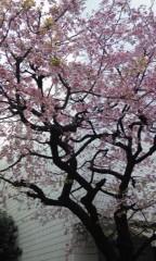 秋保由実 公式ブログ/横十間川親水公園 画像1