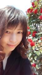蘭ちゃん 公式ブログ/生田緑地の薔薇園♪ 画像1