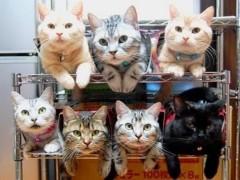 中津五貴 公式ブログ/うちの猫。 画像1