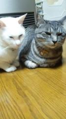 多田あさみ 公式ブログ/不機嫌 画像1