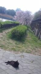 あおきさやか 公式ブログ/猫と桜と名古屋城。 画像1