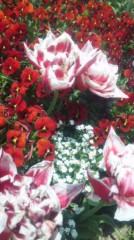 あおきさやか 公式ブログ/浜名湖ガーデンパーク3 画像3