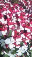 あおきさやか 公式ブログ/浜名湖ガーデンパーク5 画像2