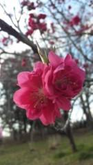 あおきさやか 公式ブログ/お花見に♪ 画像2