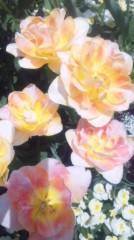 あおきさやか 公式ブログ/浜名湖ガーデンパーク4 画像3