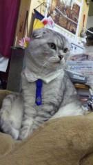 あおきさやか 公式ブログ/我輩が店長にゃ〜。 画像1