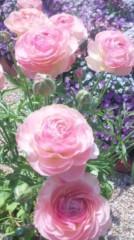 あおきさやか 公式ブログ/浜名湖ガーデンパーク5 画像3