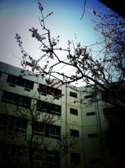 青山みなも 公式ブログ/春〜♪ 画像1