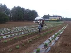 秋山莉奈 公式ブログ/野菜収穫〜(* ´∀`*) 画像1