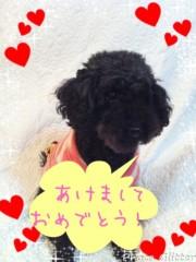 秋山莉奈 公式ブログ/2012年! 画像1