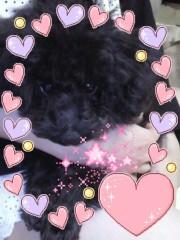秋山莉奈 公式ブログ/わんっ 画像1