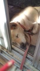 佐々木悠花 公式ブログ/天使の寝顔 画像1