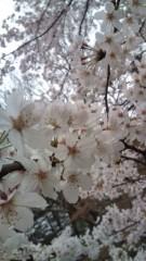 佐々木悠花 公式ブログ/お花見 画像1