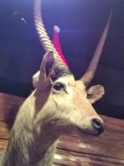 佐々木悠花 公式ブログ/クリスマスは終わっても 画像1