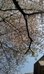 佐々木悠花 公式ブログ/葉桜 画像1