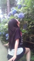 佐々木悠花 公式ブログ/食い尽くせ!! 紫陽花。 画像1