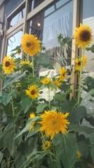 佐々木悠花 公式ブログ/夏だね。 画像1