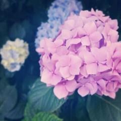 佐々木悠花 公式ブログ/連日 画像3
