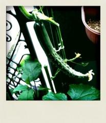 野呂佳代 公式ブログ/野呂家庭菜園パート2 画像1