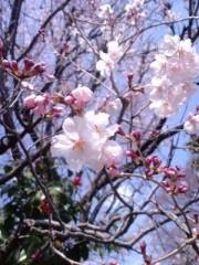 笠松江己子 公式ブログ/咲き誇れ。 画像1